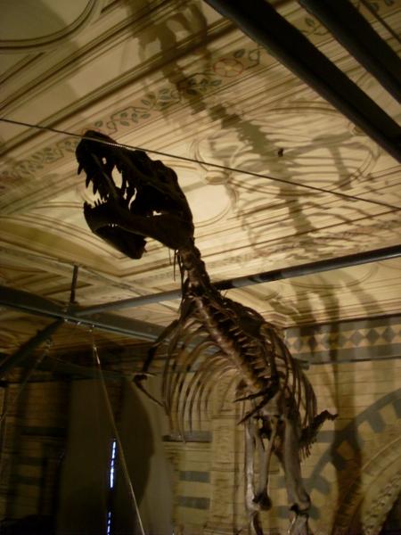 Dinosaurierknochen