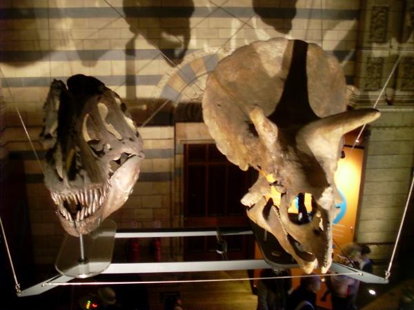 Dinosaurier Köpfe