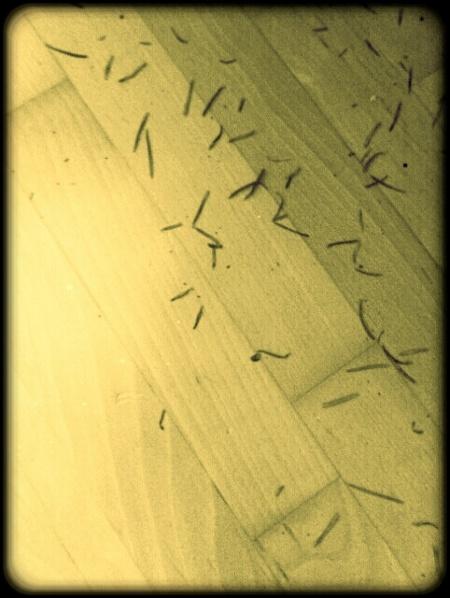 Tannennadeln und Glitzer auf dem Fußboden