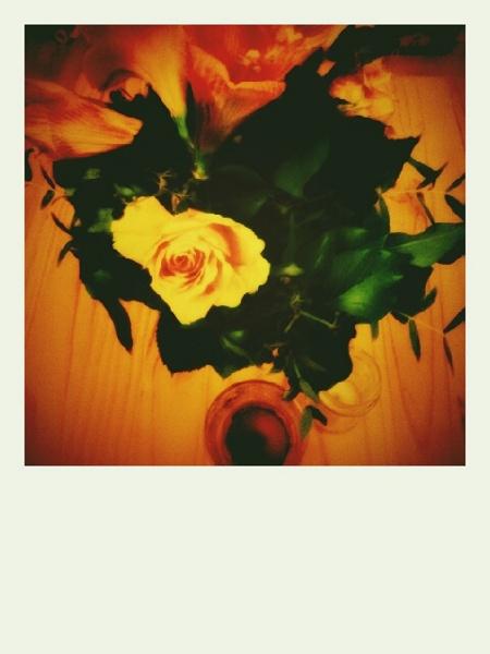 Blumen Polaroid