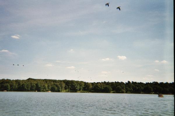 Vögel über dem Halterner Stausee.