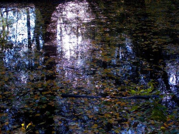 Gelbes Herbstlaub im Wasser