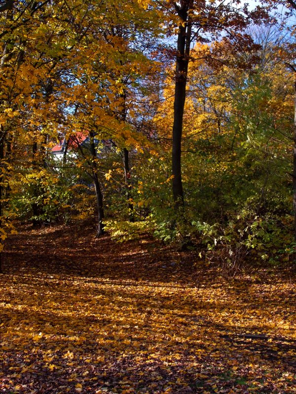 Bäume am Wegrand in Herbstlaub